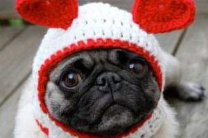 The TerminalFour Valentine's dog!